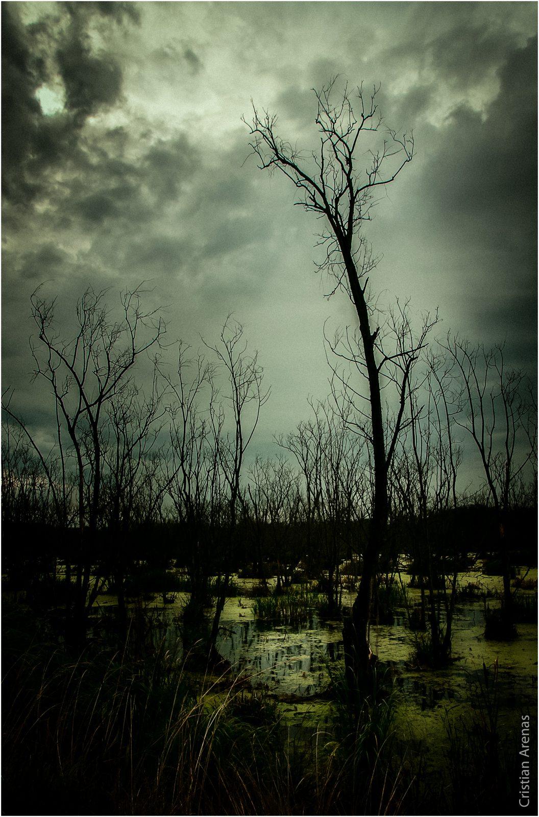 Sos el paisaje más soñado Y sacudiste las más sólidas tristezas  Cerati.